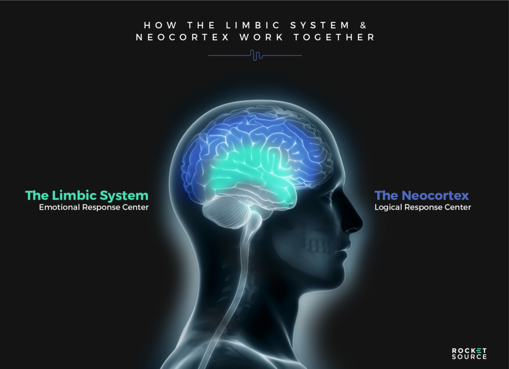 The limbic and neocortex working together